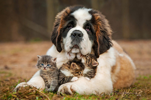 Veterinarian in Dover, NH - About Us